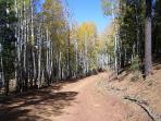 one of the many trails we access from the cabin for offroad adventure