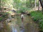 Trail meanders along a creek