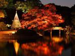 Most beautiful Japanese Garden 'Rikugi-en' 5 min walk from this Apt.