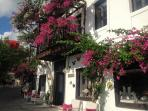 Wonderful Bougainvillea of Kalkan