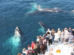 whale watching tours available during the season