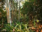 Impressions of the garden, bamboo