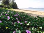 Mai Khao beach is 11km long beach still blessedly undeveloped as its part  of the national park.