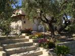 vista dall'oliveto