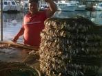 Pêcheur dans le port de Punta del Este