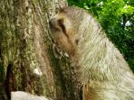 3-toed Sloth at house