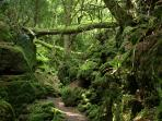 Nearby Puzzlewood, film location for the new blockbuster Star Wars film 'The Force Awakens'