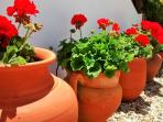 Pretty gardens at Monte da Quinta