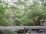 Summer Deck View
