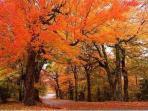 Fall on Sugar Mountain