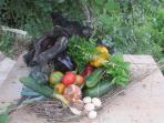 prodotti nel piccolo orto e pollaio privato all'interno della proprietà