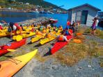 Kayaking in Bay Bulls or Cape Broyle.