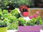 Our little garden.