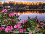 water flowers sunset