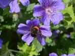 We actively encourage wildlife in our garden.