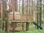 Tree fort in our back forest