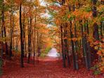 Nearby walking trail in Fall
