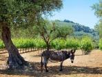Nina donkey