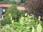 Viel grün im schönen Garten