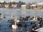 The city pond