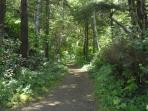 Cape Perpetua Hike ~ 12 miles from Pacifica House on Highway 101 South ~
