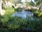 Beautiful Pond on our property with Koi Fish