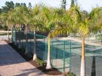 private tennis court surrounded by royal palms