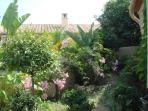 Garden with mediterennean plants