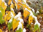 When winter meets fall...