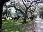 Wild Horses on Cumberland