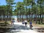 Les pistes cyclables dans la forêt de la Courbre