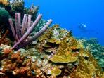 Marazul Reef