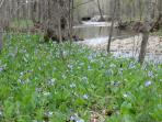 Wild Flowers Along The Creek In Spring