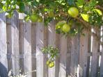 Low hangin' fruit ...and in your own backyard !