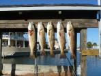 Redfish dinner