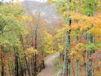 Driveway in Autumn