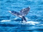 Whale Watching at its Best