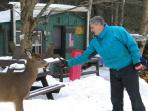 Feeding wild deer snowmobiling on Carry Road at Ray Chabot's Sugar Shack