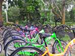 Discover Balik Pulau by bicycle tour