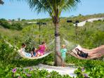 Relaxing hammock garden - hung between fully grown palms in the citrus grove