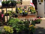 Plants for sale at the Village Shop
