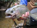 World-class trout fishing nearby