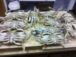 Morning Crab Catch