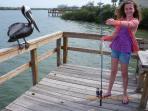 Pelican begging for fresh caught pin fish