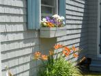 Flower box by kitchen window, over the sink.