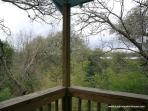 From the porch - the wooded area behind the property