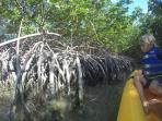 Explore the mangrove tunnels and bring your fishing rod.