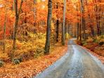 Take a country drive through the autumn colors.