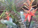 Casa Estrella garden in bloom