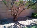 The view from your bedroom is of this tree and birdfeeders, decorated with shells.